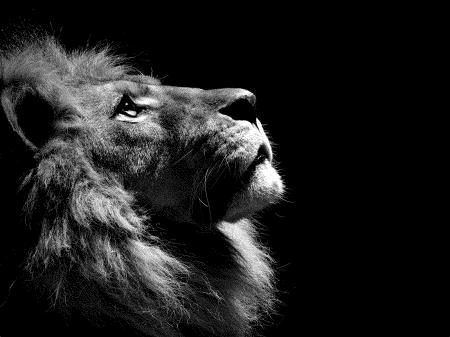 lion1 1123