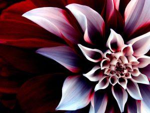 Beautiful-flower-02