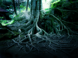 Bali__s_Tree_Photography_by_HenrirneH